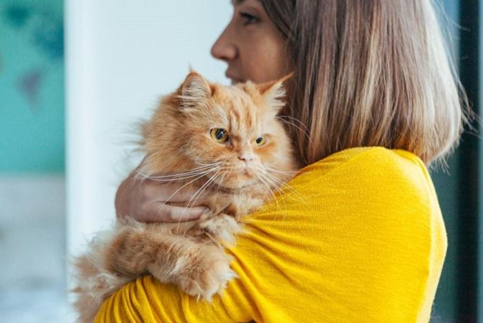 Kot długowłosy trzymany na rękach kobiety.