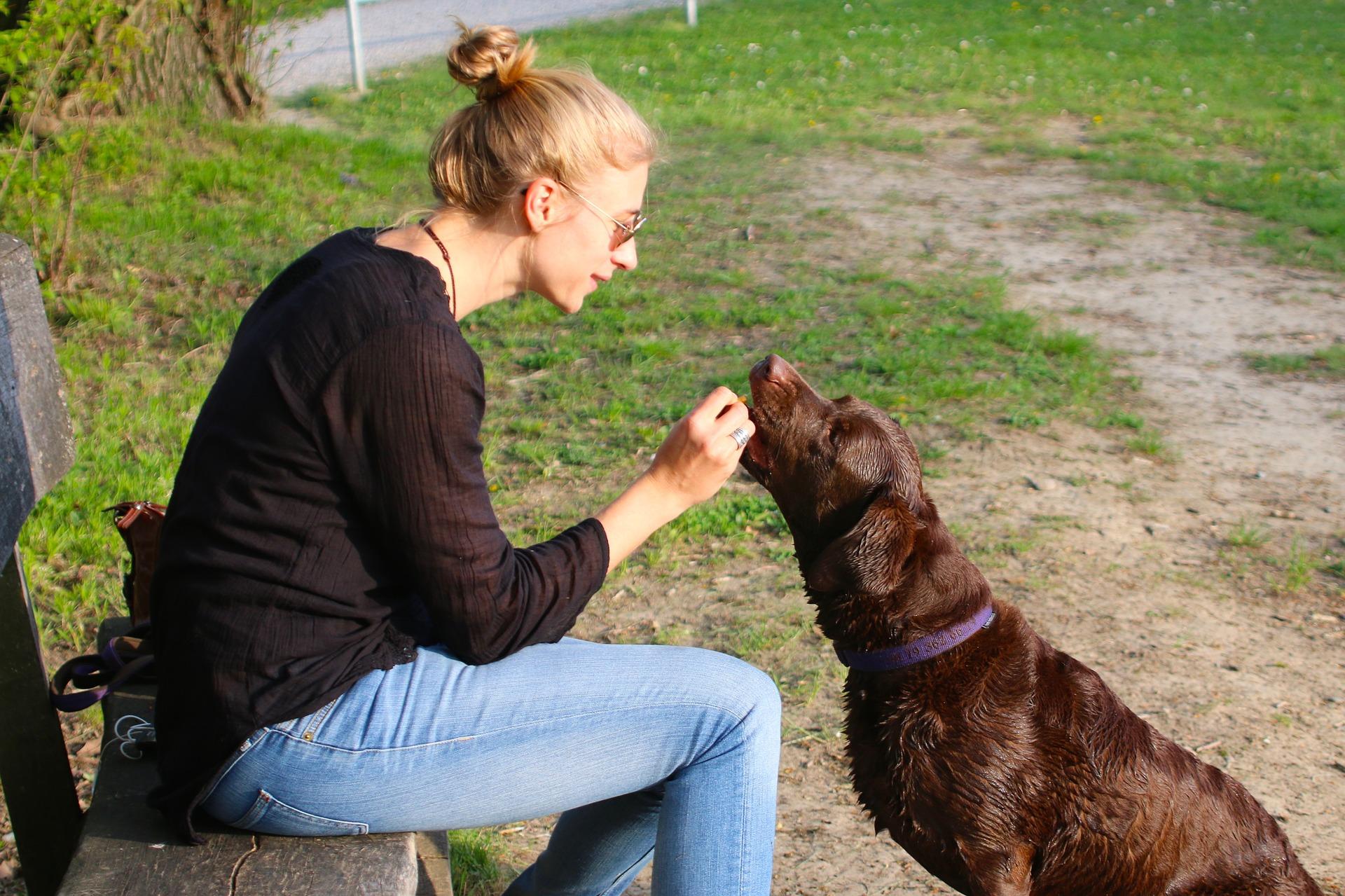 Hodowcy i trenerzy podkreślają, że w wychowywaniu psów podstawą jest pozytywne motywowanie i nagradzanie pupila. Użycie kantara jest formą kary i nie powinno w żadnym przypadku stać się jedną z głównych metod tresury.