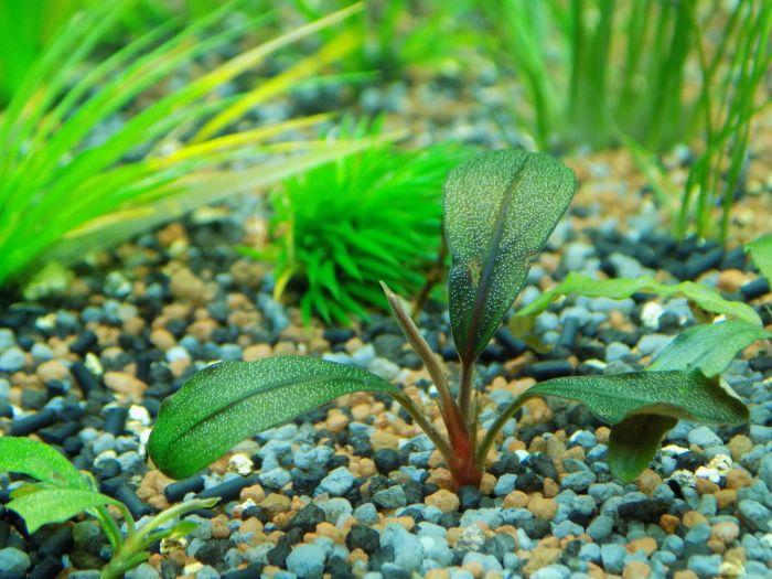 Rośliny akwariowe zasadzone w podłożu żwirowym.