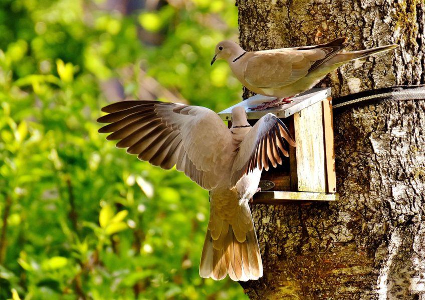 Żywienie gołębi zależy od pory roku i od wieku ptaków.