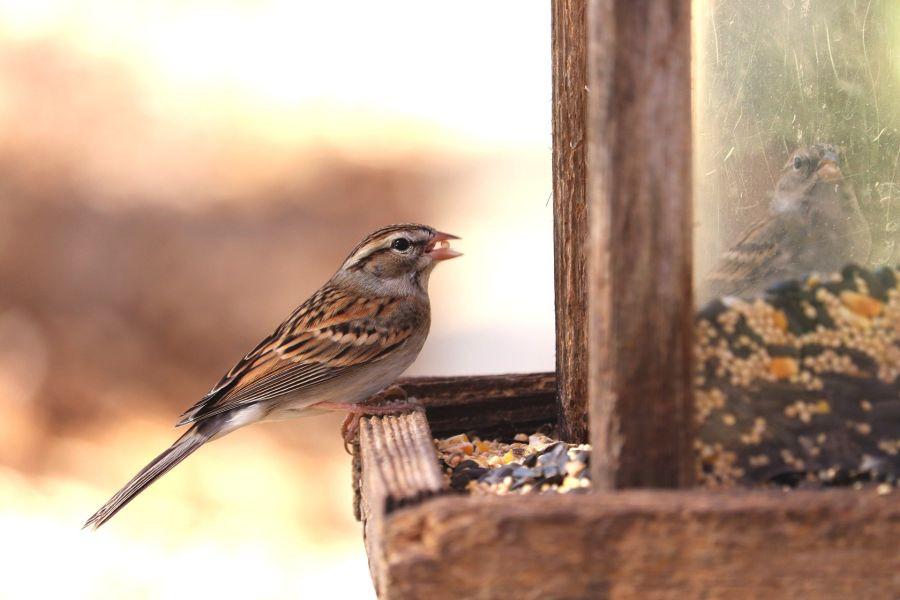 Karmnik dla ptaków powinien być w miejscu łatwo dostępnym, ale jednocześnie na tyle bezpiecznym, aby drapieżniki do niego nie miały dostępu.