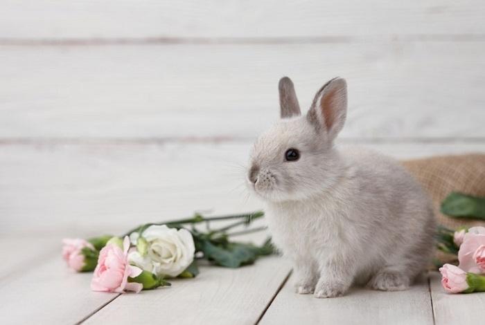 Królik miniaturka w kwiatach.