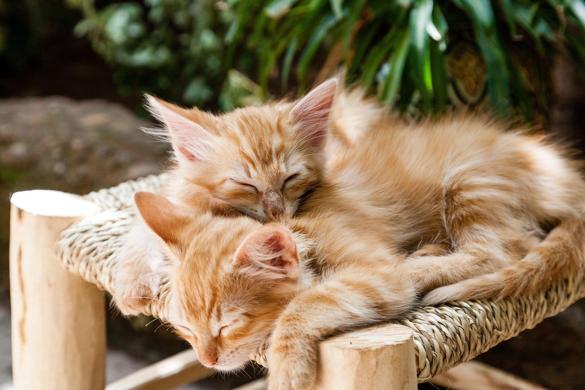 Koci hamak ma jednak tyle zalet, że z dużym prawdopodobieństwem futrzasty przyjaciel zadomowi się w nim na dobre.