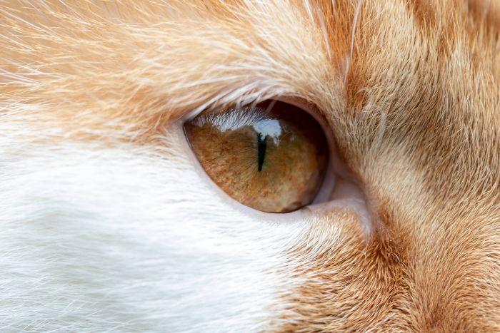 Kot ze zwężonymi źrenicami