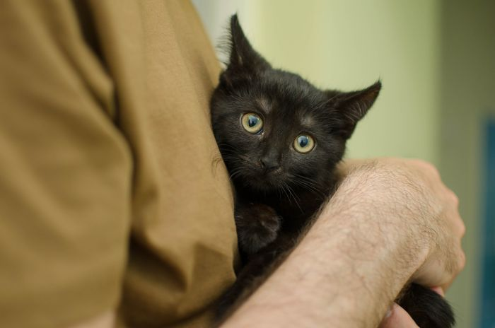 Czarny kot w ramionach opiekuna.