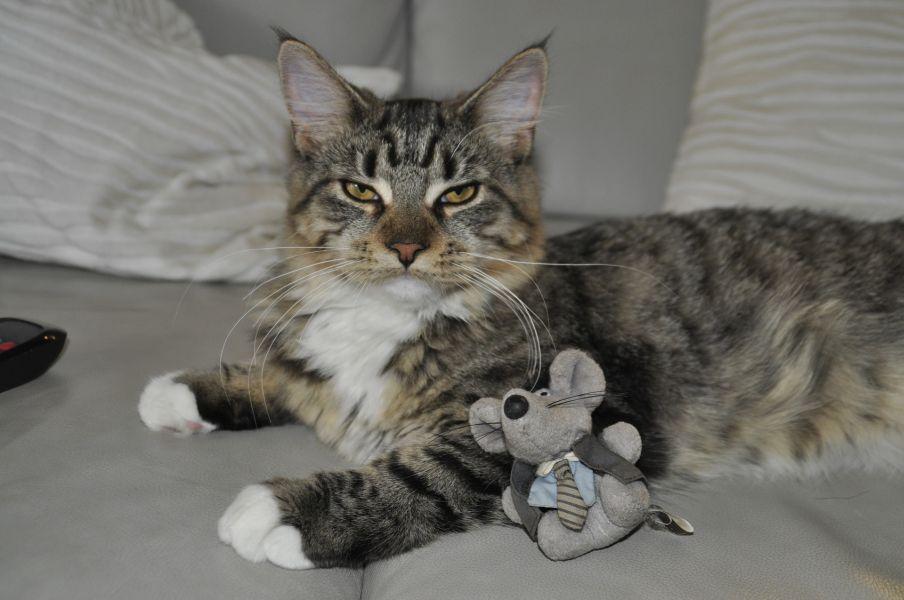 Kot leży obok pluszowej myszki.