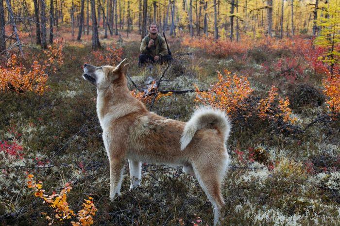 Pies łajka w lesie przy ognisku