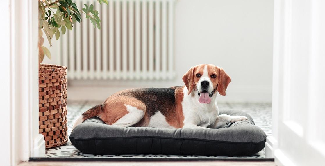 Ponton legowisko dla psa