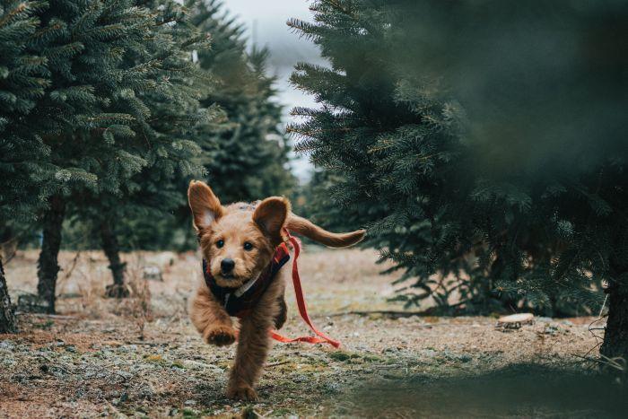 Pies biegnie ścieżką w lesie