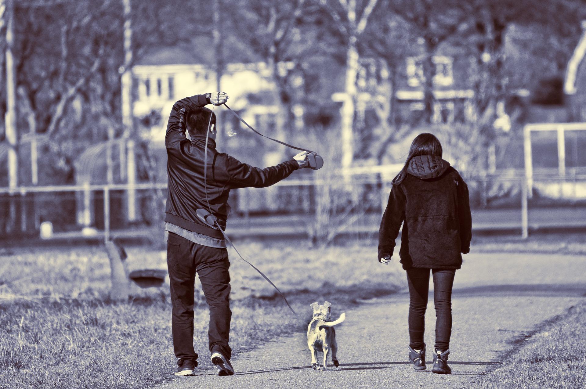 Nauka psa chodzenia na smyczy wymaga wiele cierpliwości i stanowczości ze strony opiekuna. Regularne treningi i akcesoria - przysmaki treningowe, smycz treningowa i wygodne szelki ułatwią pracę.