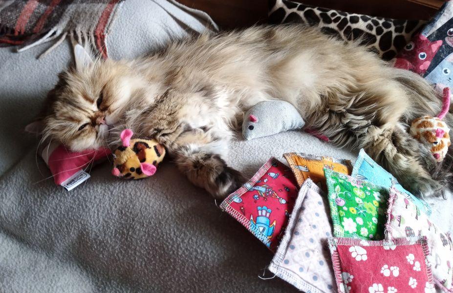 Kot leży na zabawkach w formie poduszek, zabawki z kocimiętką lub walerianą mogą odstresować kota.