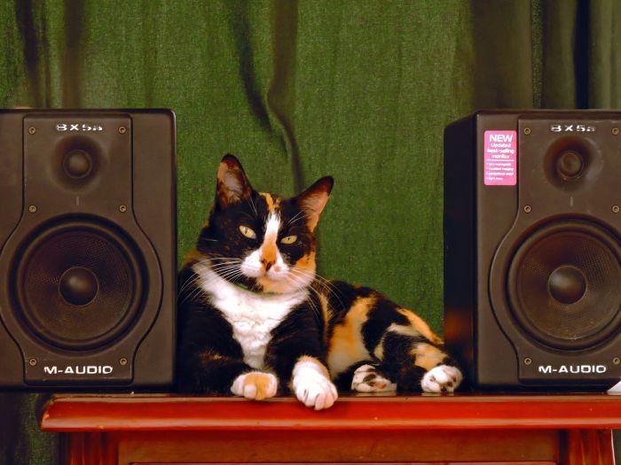 Kot leży pomiędzy głośnikami.