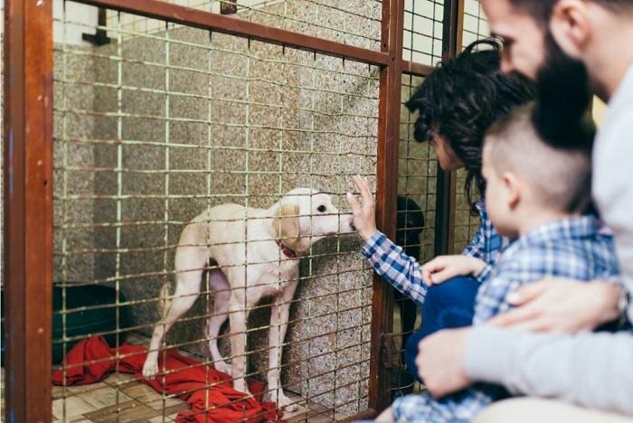 Rodzina w schronisku dla zwierząt wita się z psem.