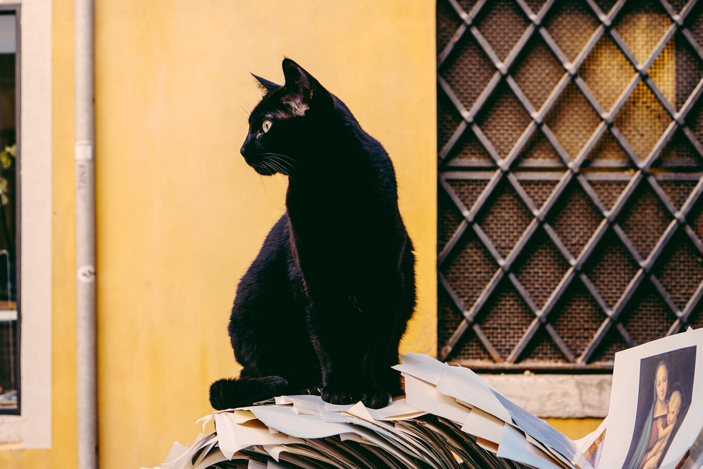 Czarny kot siedzący przed budynkiem na stercie gazet.