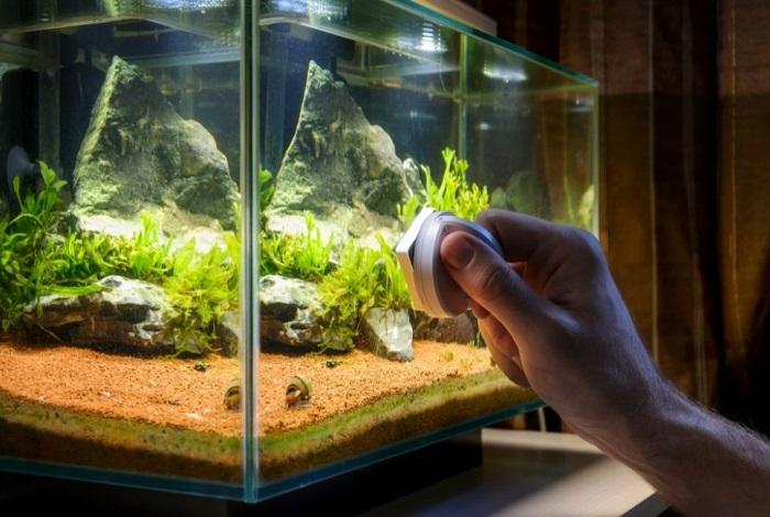 Czyszczenie akwarium z okrzemków.