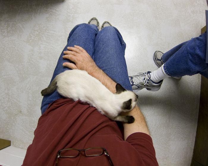 Kot na kolanach opiekuna w klinice weterynaryjnej.