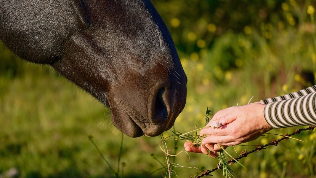 Niektóre rośliny i warzywa mogą zmniejszać ryzyko zarobaczenia się konia, są to m.in. pietruszka, czystek, dynia.