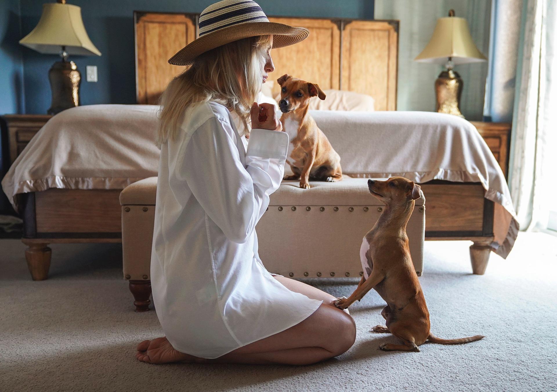 Zabawy ze szczeniakiem w domu mogą polegać na codziennym trenowaniu i utrwalaniu komend, a następnie na wspólnej zabawie.