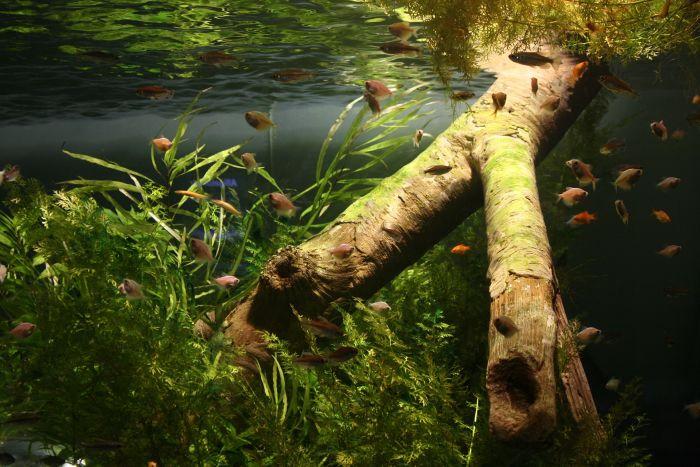 Akwarium z rybkami i bujną roślinnością.