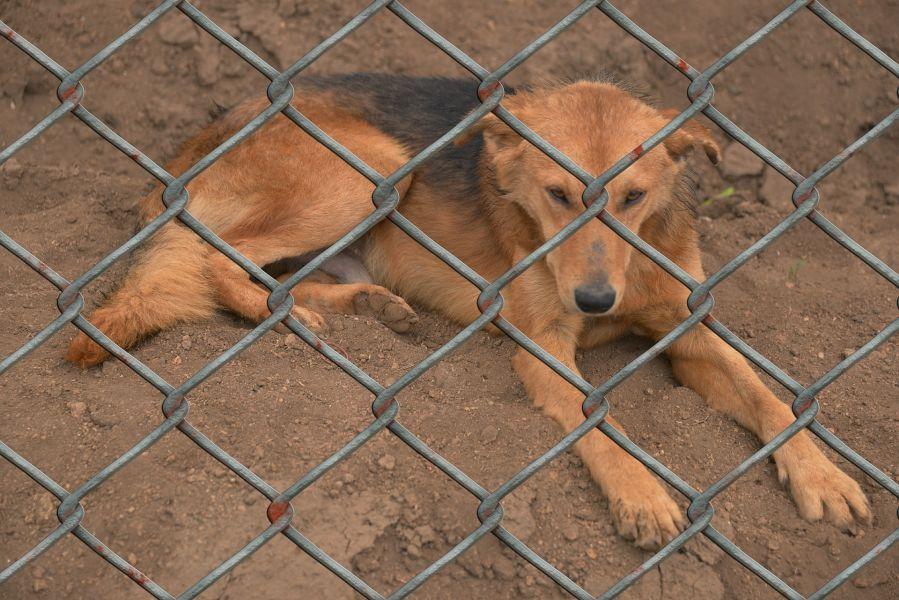 Smutny pies leży na piasku, zza krat klatki.