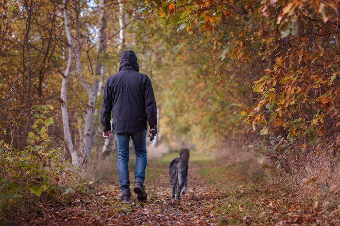 Pies na spacerze w lesie.