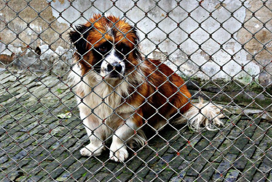 Smutny i przemoknięty pies w boksie schroniskowym.