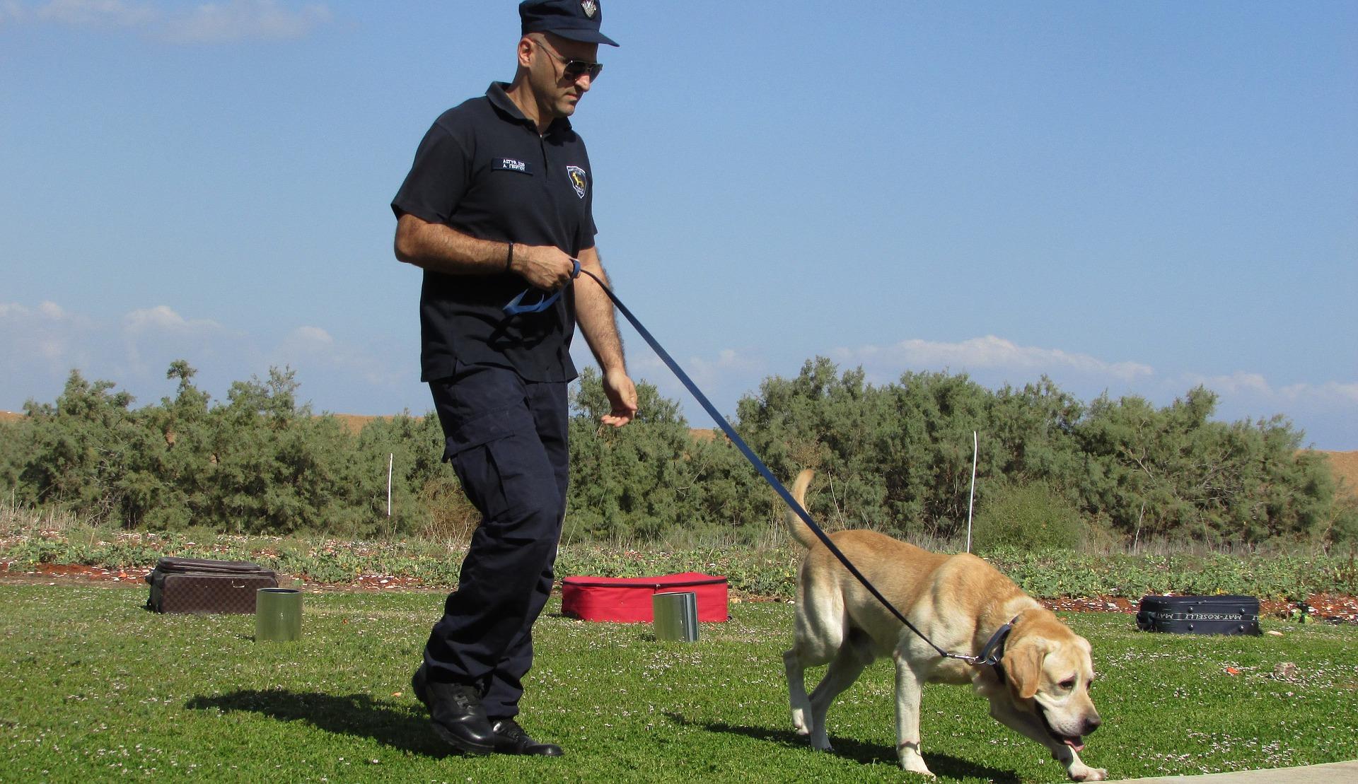 Pies policyjny jest od szczeniaka trenowany w określonych czynnościach. Niektóre rasy, jak np. owczarek niemiecki mają predyspozycje do pracy w służbach.