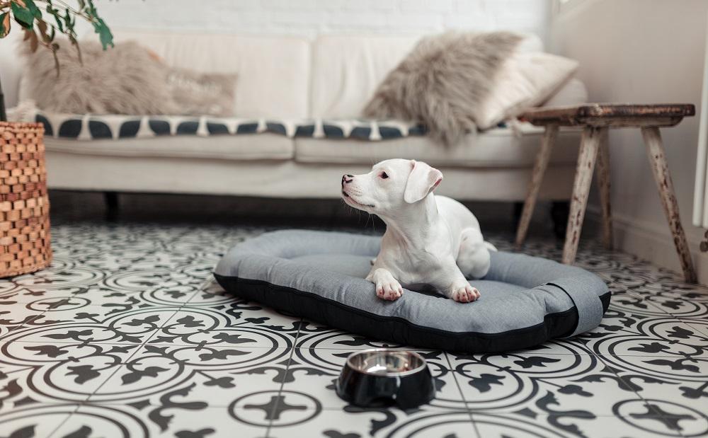 Modernes Hundebett.