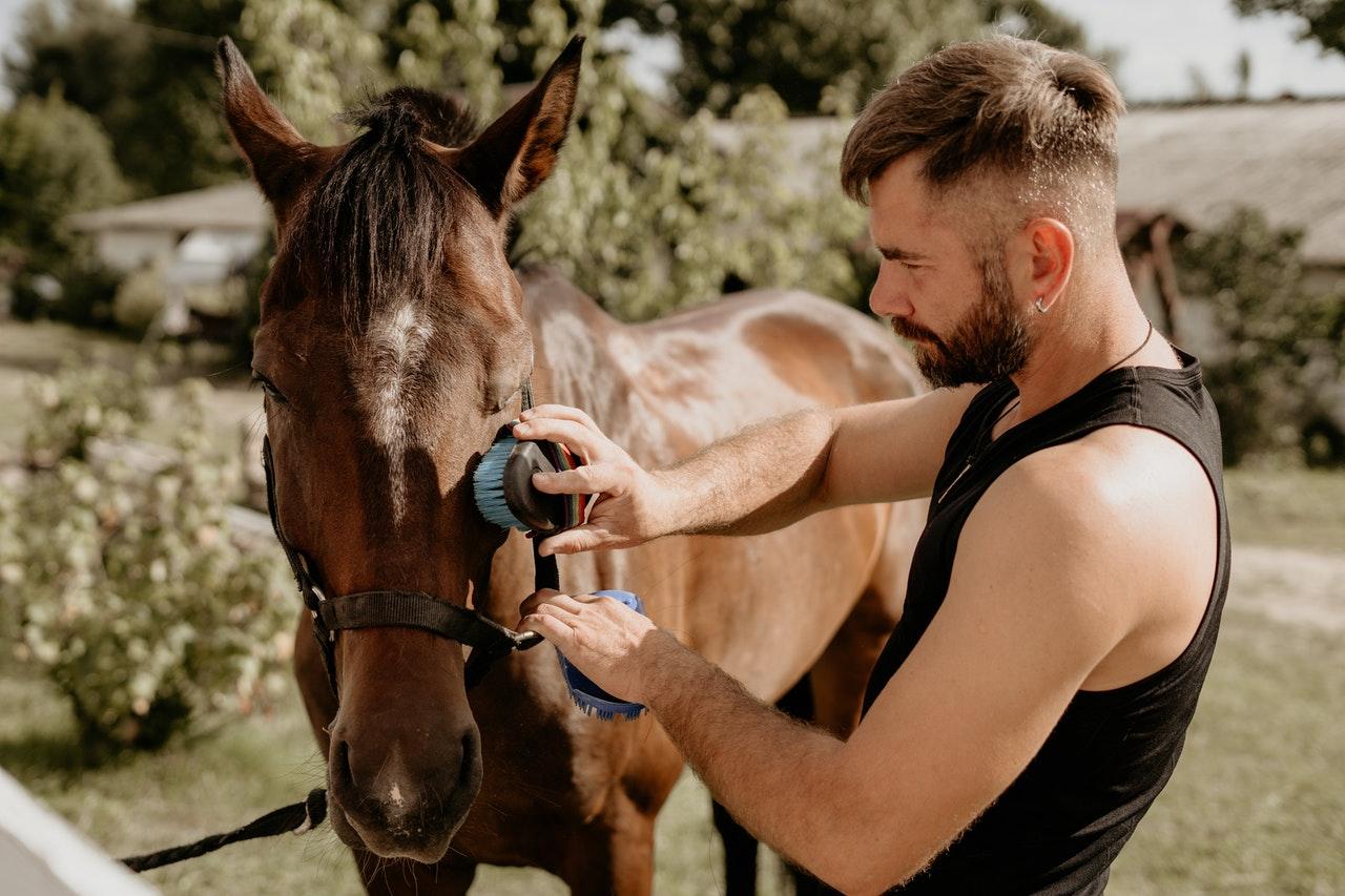 Przed jazdą konną zawsze należy przygotować konia. Po jeździe należy go wyczyścić.