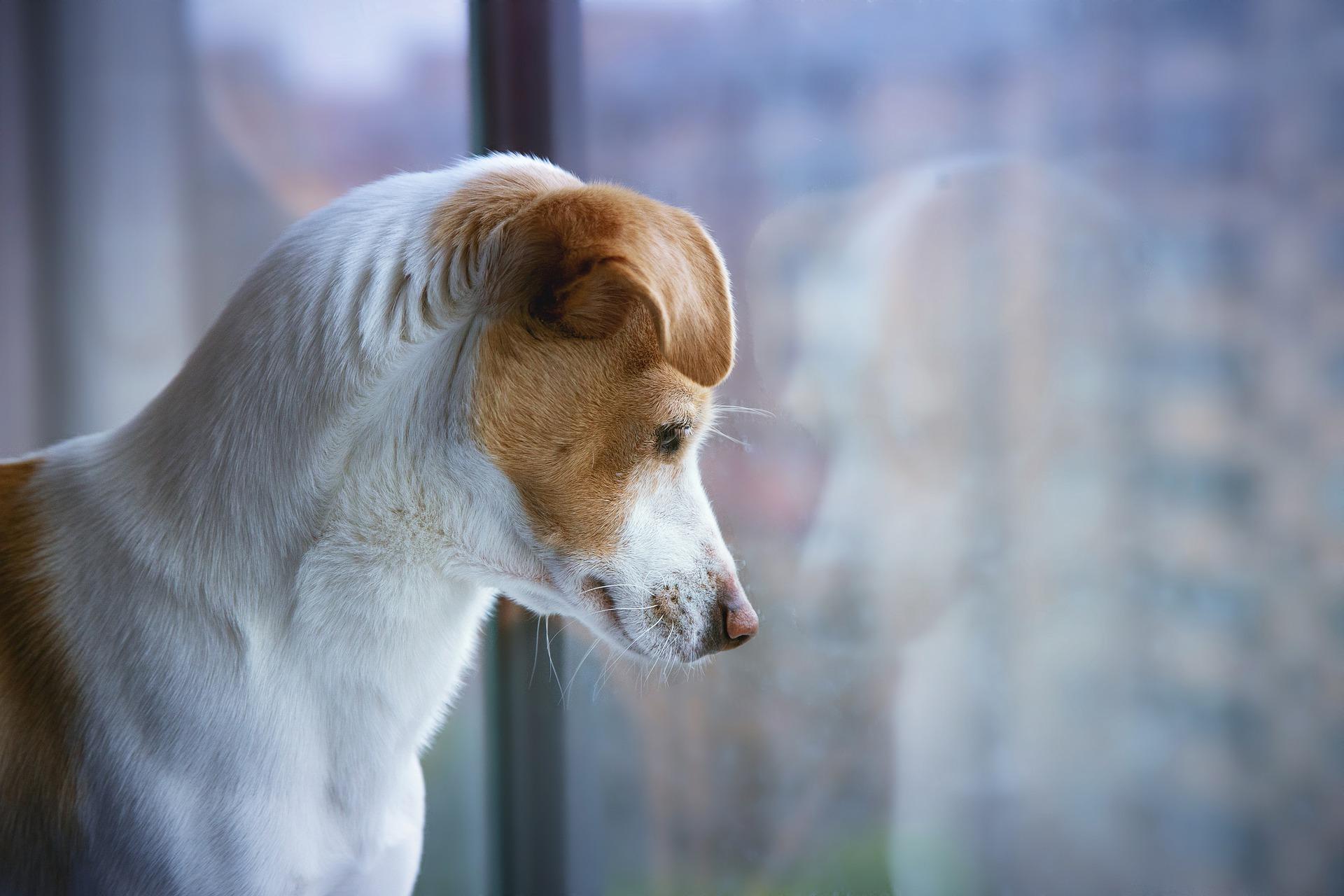 Wychowanie psa powinno opierać się przede wszystkim na pozytywnym wzmacnianiu. Nie zaleca się metod awersyjnych oraz karcenia psa.