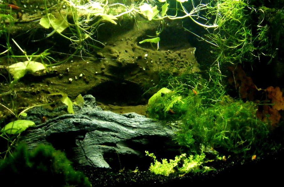 Bujne rośliny zielone w akwarium