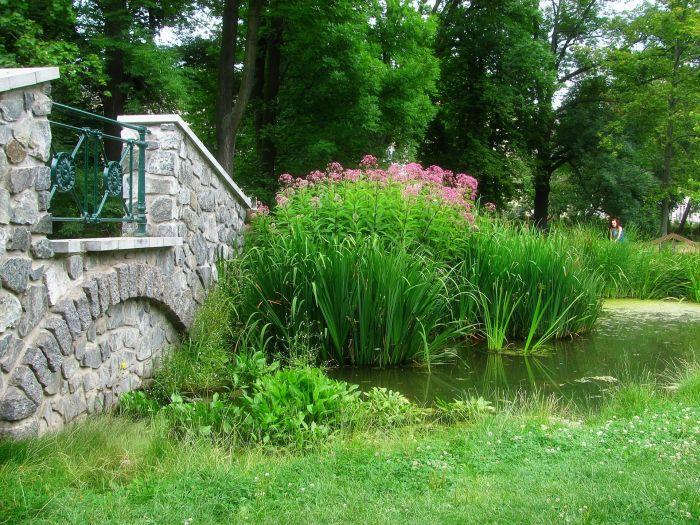 Oczko wodne z roślinnością przybrzeżną i mostkiem.