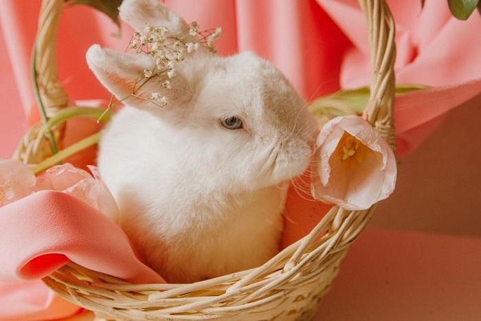 Królik miniaturowy w koszu kwiatów.