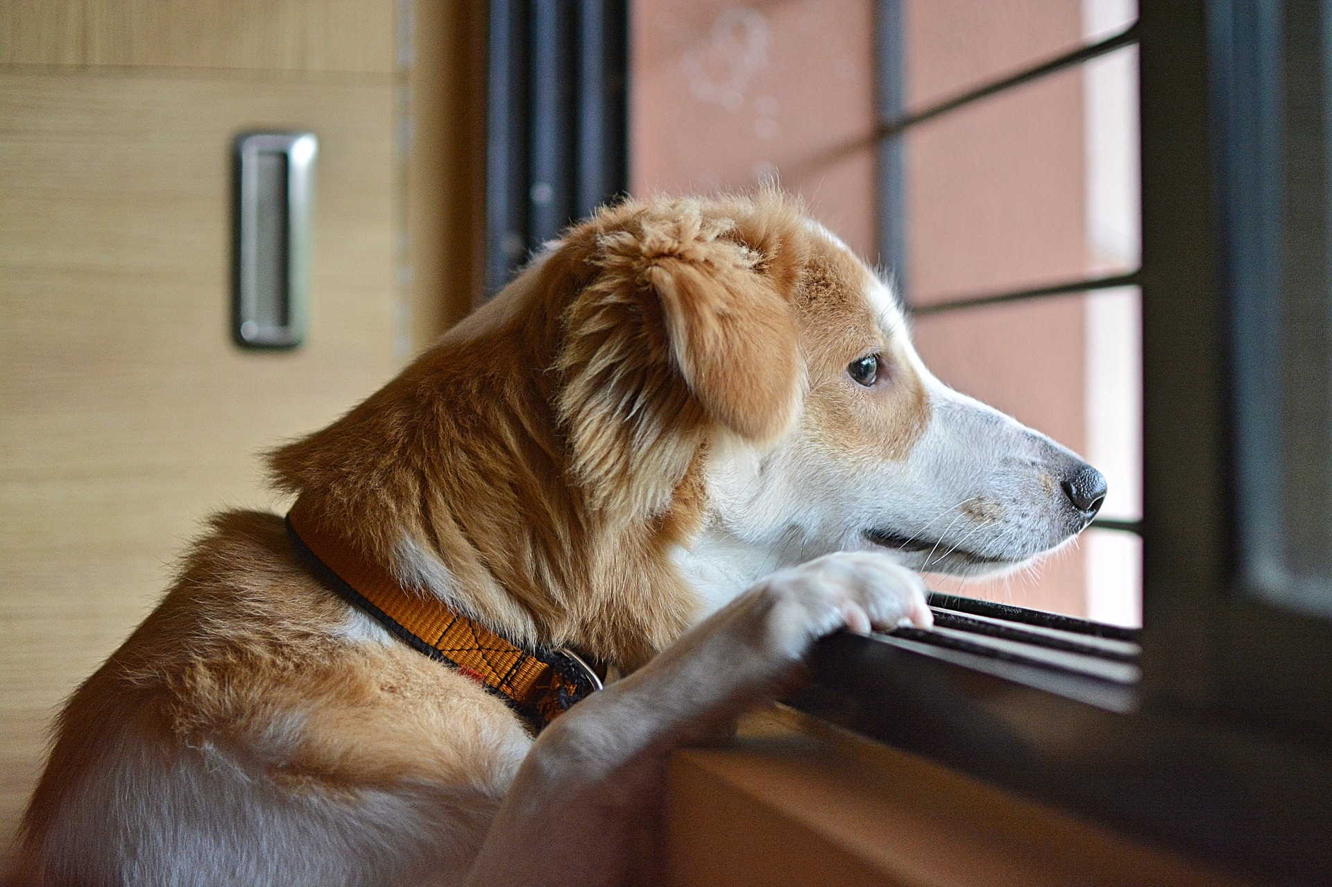 Brak odpowiedniej socjalizacji jest jedną z głównych przyczyn powstawania lęku separacyjnego u psów. Jest on na tyle szkodliwy, że nie pozwala na pełne zdrowie psychiczne i fizyczne psów.