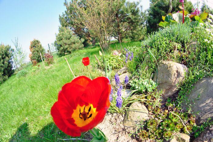 Rośliny i kwiaty na skalniak.
