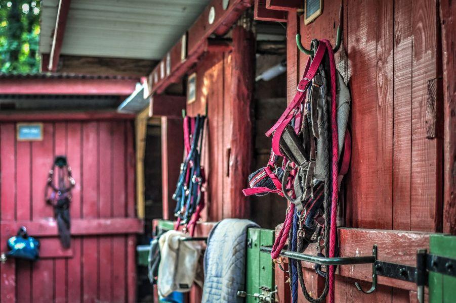 Stajnia i poszczególne akcesoria jeździeckie, takie jak wędzidła, haltery, siodła.