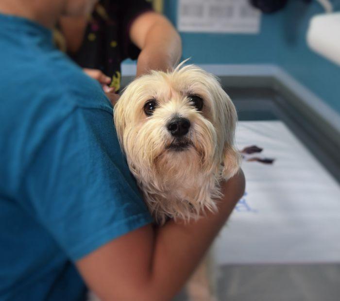 Pies podczas wizyty u weterynarza
