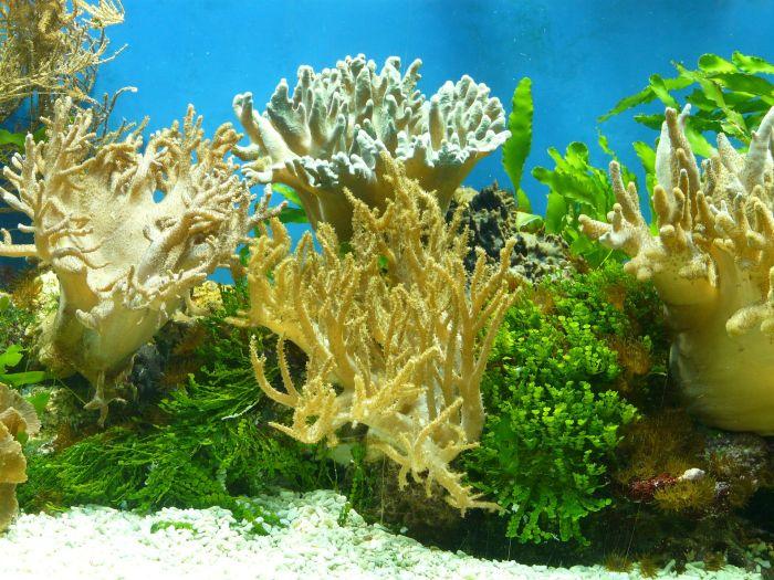 Akwarium pełne roślin jest idealne dla żałobniczek