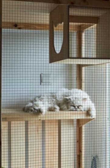 Kot pers leży w wolierze urozmaiconej w drapaki i podwieszane półki.