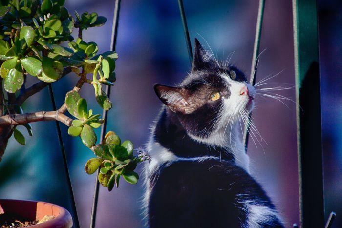 Kot na niezabezpieczonym balkonie.