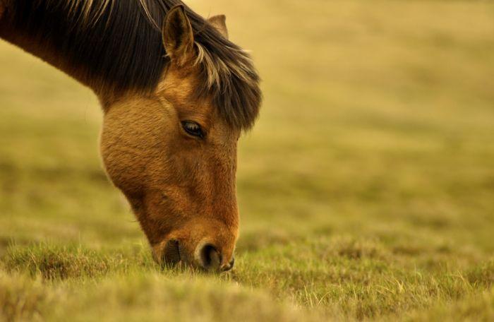 Koń je trawę na pastwisku