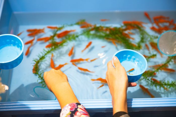 Karmienie rybek akwariowych w baseniku.
