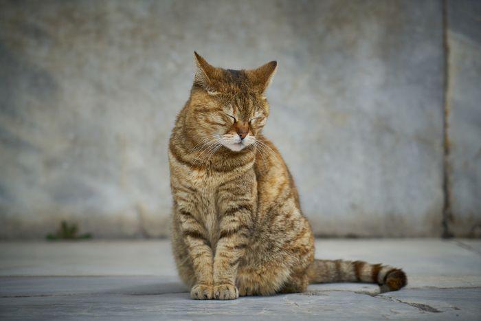 Kot z przymrużonymi oczami na ulicy.