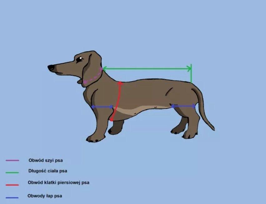 Jak dobrać ubranka dla psa?