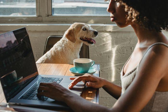 Pies siedzi na krześle w kuchni obok kobiety z laptopem
