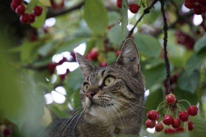 Kot wśród liści na drzewie