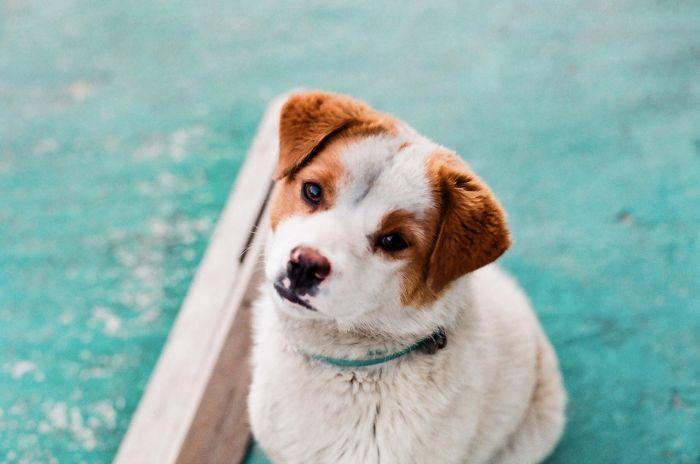 Czy istnieją testy na koronawirusa dla psa?