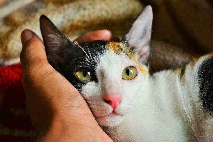 Kot w objęciach ludzkich rąk.
