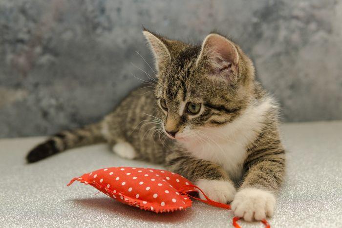 Kociak z pluszowym serduszkiem na kanapie.