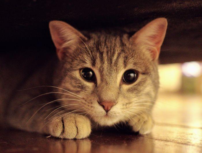 Kot z rozszerzonymi źrenicami